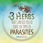The Regular Parasite Cleanse – Dr Hulda Clark