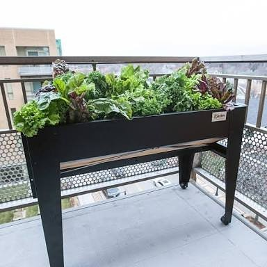 Trying to make my new balcony a food forestfernerygreenery zenlikehellip