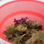 Daily Salad Mixed Lettuce