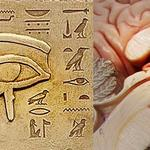 Pineal Gland Experiment [Food Diary Week 1] – Journey to a Better Life