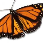 Help a dying butterfly? Animal Totem