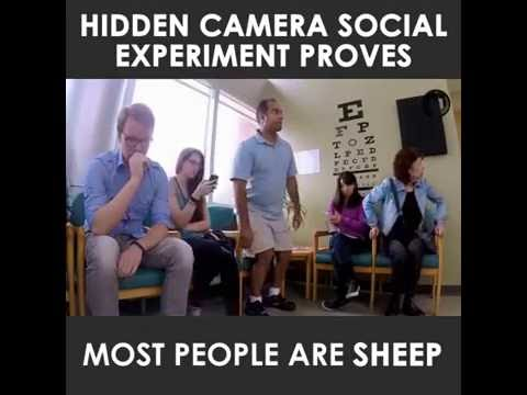 Social experiment proves most people are sheep (& why that gives me hope)